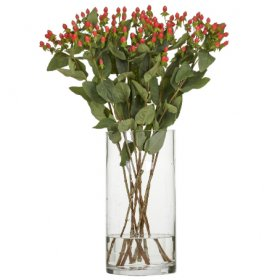 Hypericum Fire Flair