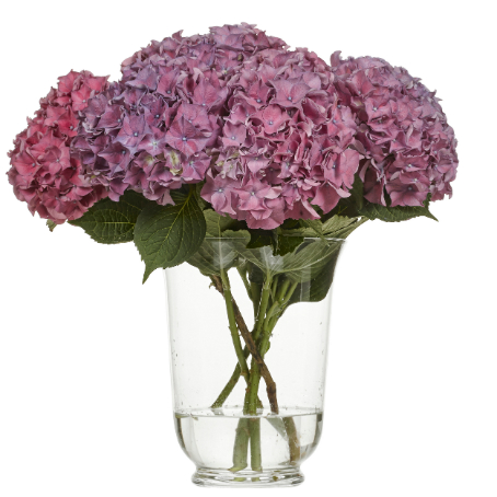 Hortensia Rodeo Paars